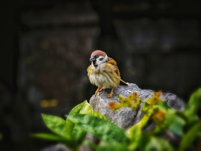 One Animal Animal Themes Close-up Animal Wildlife Animals In The Wild Beauty In Nature Outdoors Focus On Foreground Sparrow! Sparrow EyeEm Best Shots EyeEm Gallery A Moment Of Zen... Em Natural Lover Beauty In Nature Nature No People Shadows & Lights TheSecretGarden Tranquility