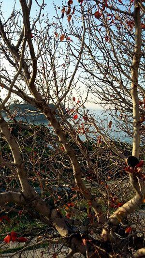 Kusadasi Hugging A Tree Trees And Sky Colorful Sea Beautiful Nature