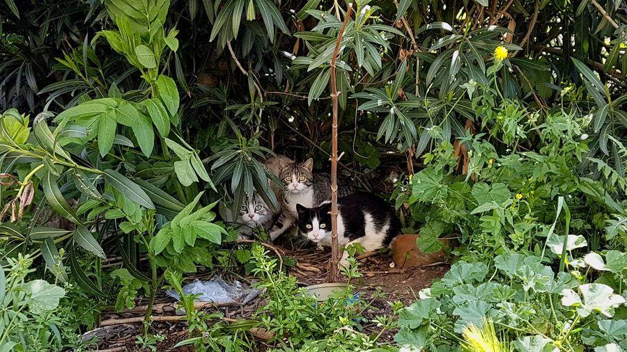 cats EyeEm Selects Cats Of EyeEm Enjoying Life Animal Themes EyeEm Best Shots Curious Cat Biutiful Aragón Spain♥ Shhhhhhhhh ☝ Tree Leaf Close-up Green Color Plant