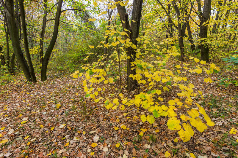 Yellow flowers growing on tree during autumn