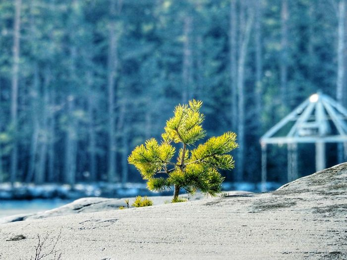 Nature_collection Nature Beauty Winter Nature Outside Winter Walks On The Beach Nature Beautiful Nature Green Colour Winter Nature Branch Of A Tree Lonely Tree Tree On Rock