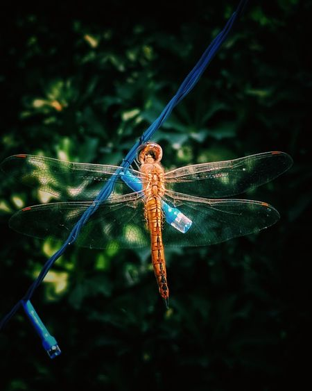wings Nature Nature_collection Nature Photography Damselfly Insect Full Length Close-up Animal Themes Dragonfly Animal Antenna Mosquito Butterfly - Insect