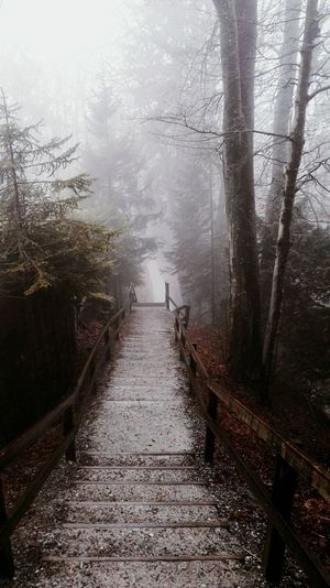 Weather Fog Water Cold Temperature RainDrop Condensation Drop Nature Outdoors Mount Uetli üetliberg Zürich No People Tree