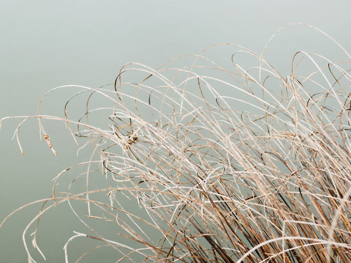 Autumn Grass Abstract Beauty In Nature Botanical Close-up Day Dry Growth Minimal Nature No People Outdoors Pale Plant Tranquility Water