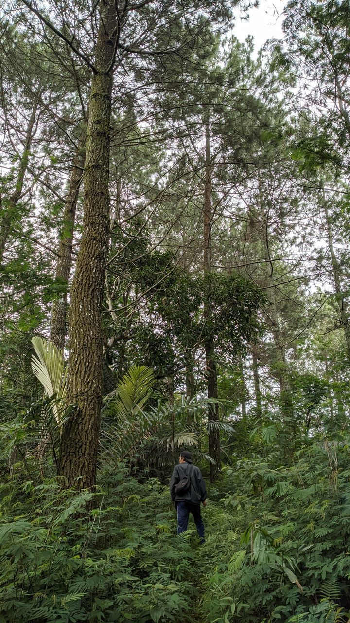 REAR VIEW OF MAN WALKING AMIDST PLANTS IN FOREST