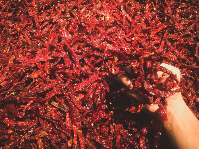 drychilisss Red