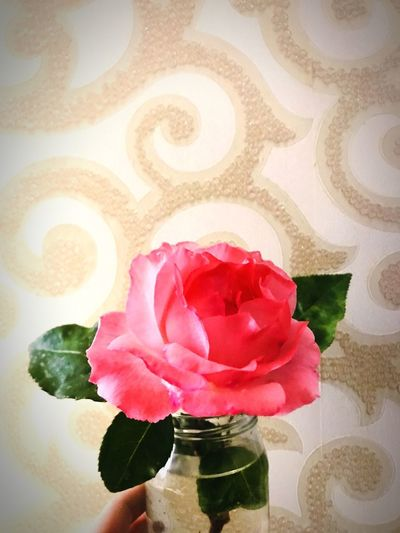 Rose 🌹 Rose - Flower Flower Flowering Plant Plant Freshness Beauty In Nature Rosé Rose - Flower Indoors  Fragility Close-up Petal Nature Inflorescence Vulnerability  Vase Pink Color No People Flower Head Glass - Material Table My Best Photo Springtime Decadence