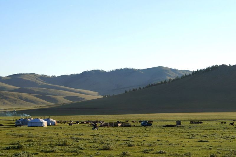 Cows grazing on field against clear sky