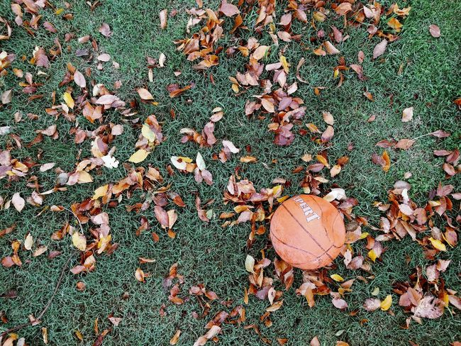 Fin del juego Day High Angle View No People Outdoors Nature Backgrounds Close-up Full Frame Leaf Foto Photo Photography Ball Basquetball
