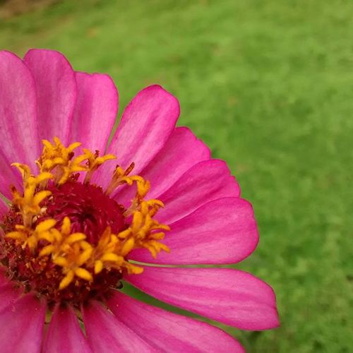 certain things blossom so well, while others do not... NoRomance Nofilter Lush Green Flower Monsoon