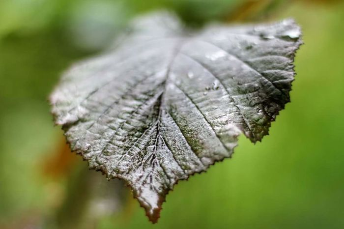 Close-up Nature No People Day Leaf One Animal Focus On Foreground Butterfly - Insect Outdoors Fragility Animal Themes Beauty In Nature Wet Leaf
