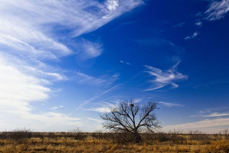 Mesquite and prairie sky Prairie Scenes Texas Skies Texas Landscape Silhouette Mesquite Clouds And Sky Blue Sky