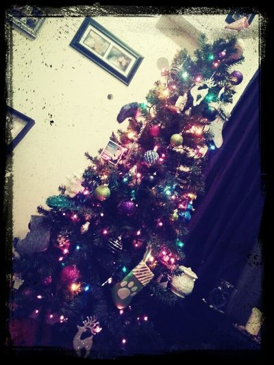 I dont wannaa take my tree down :( Year Round Christmas