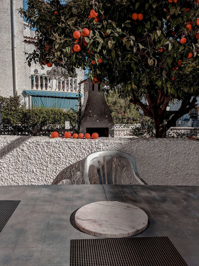 a table under an orange tree Garden Table Orange Tree SPAIN Mediterranean  Fruit Fruit Tree Springtime Harvest Home Grown Home Grown Food Seville Oranges Shade Tree Sky Orchard Orange - Fruit Foliage Outdoor Cafe Blossom In Bloom