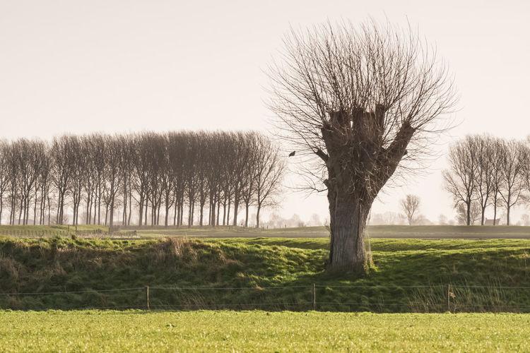 Bare tree, seen from the road between Schoondijke and Breskens EyeEm Market © Tranquil Scene Landscape Environment Grass Bare Tree Tree Line Isolated Zeeuws Vlaanderen Zeeland  The Netherlands Sony A77ii