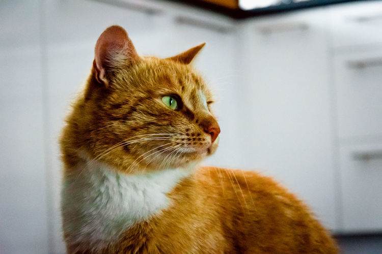 #photography #EyeEmBestShots Pets Domestic Cat Feline Close-up Ginger Cat Cat At Home Adult Animal Home Animal Face Kitten