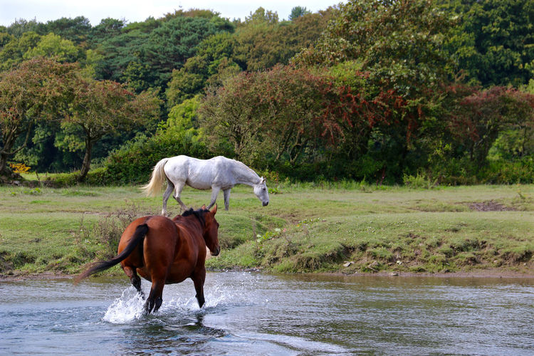 Horses wandering around the creek during summer