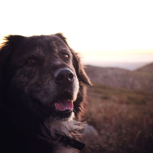 Dog Pets Close-up Nature Outdoors Focus On Foreground Sky Landscape Foia Sunset Portugal Algarve Mountain first eyeem photo