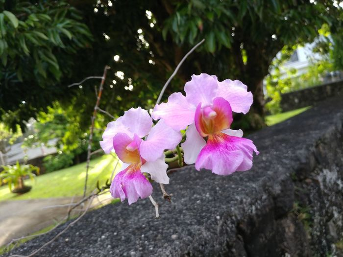 Flower Flower Head Tree Pink Color Petal Branch Close-up Plant Plant Life In Bloom Botany Blooming