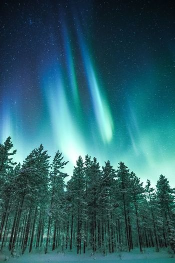 Awesome arctic night in Lapland Tree Beauty In Nature Tranquility Sky Forest Tranquil Scene Nature Night Green Color Winter Snow Low Angle View Cold Temperature Astronomy Landscape Northern Lights Aurora Polaris Freshness Outdoors Photography Nature_collection Blue Explore Scenics Travel Destinations
