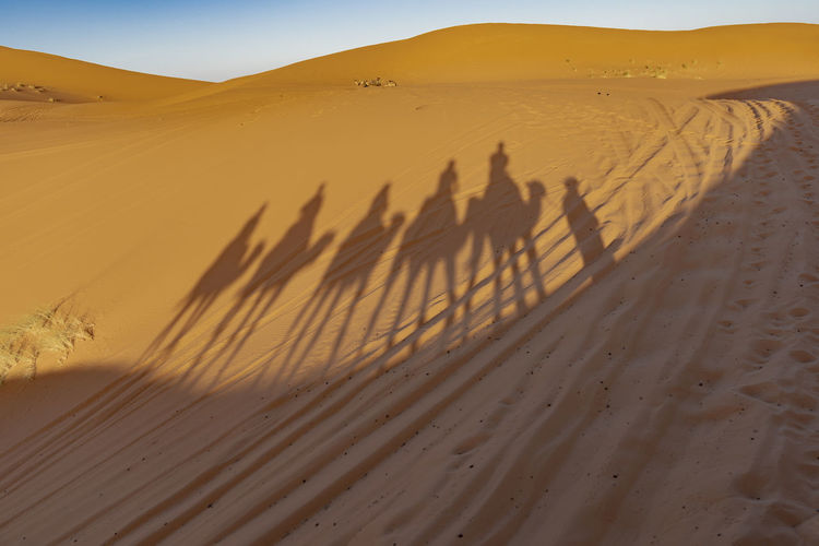 Sand Sand Dune Desert Shadow Landscape Arid Climate Camel Tranquility Group Of People Focus On Shadow Riding Camel Riding Camel Train Sahara Desert Long Shadows Sunset North Africa Middle East Travel Destinations Tourism Ancient Civilization Bedouin Nomadic Berber  Lifestyles