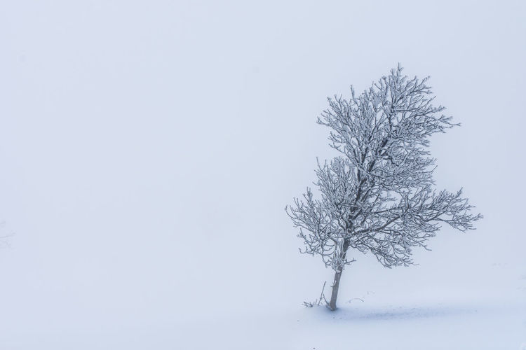 Abandoned tree