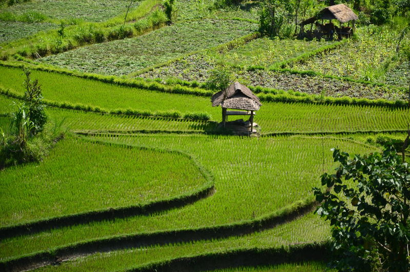 rice field Agriculture Agushariantophotography Beauty In Nature Day Green Color Growth Landscape Nature No People Outdoors Rural Scene Tranquil Scene Tranquility