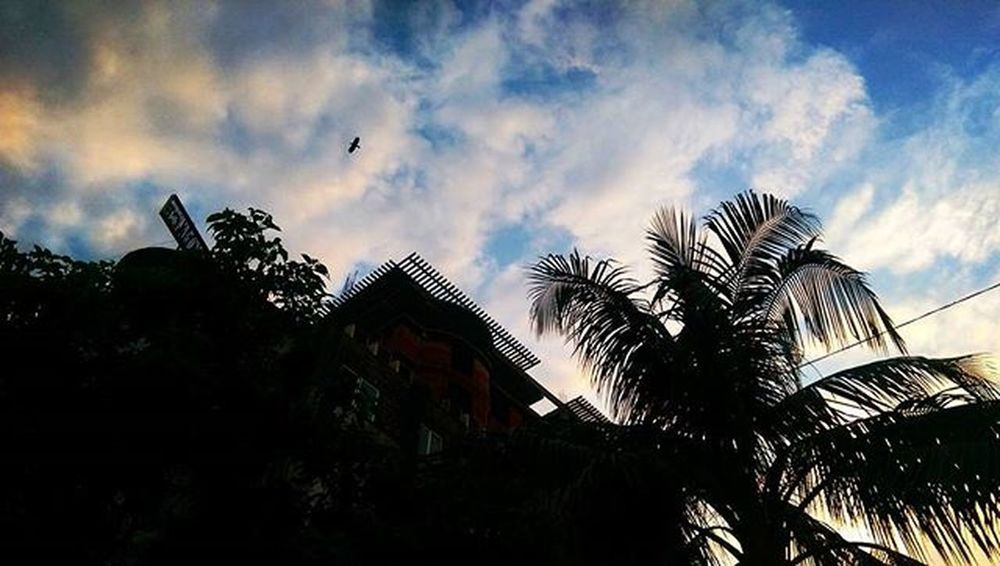 Sky KillinIt Damn Wonderfulview Bluesky Sunnyday Sunlight Bird Trees Coconuttrees Summer SummerinBangladesh Shadows BoOmNaTh Boom
