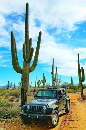 Jeep Wrangler Unlimited Saguaro Cactus Cloud - Sky Outdoors Nature Arid Climate Desert Prickly Pear Cactus