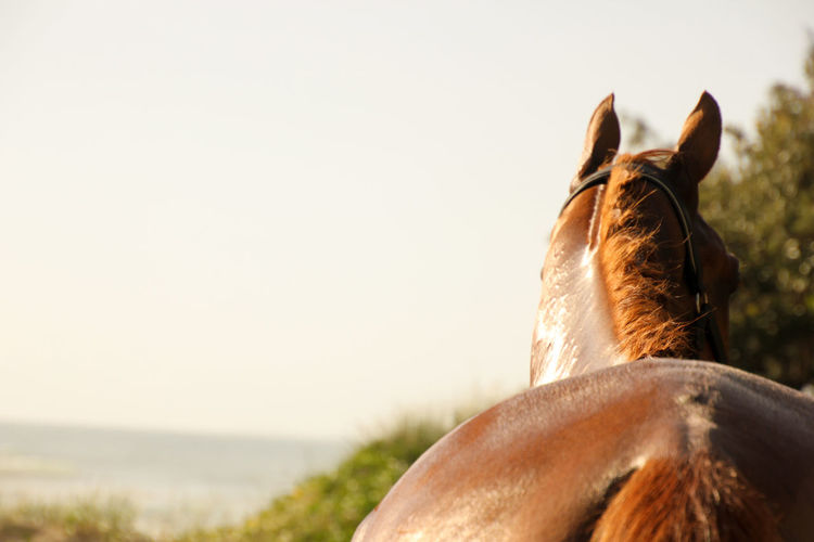 Close-Up Of Horse Standing Against Sky