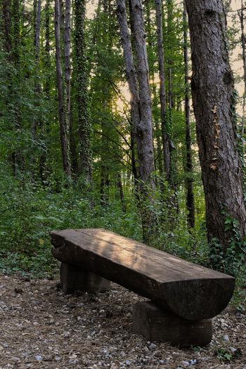 Tree bench Tree