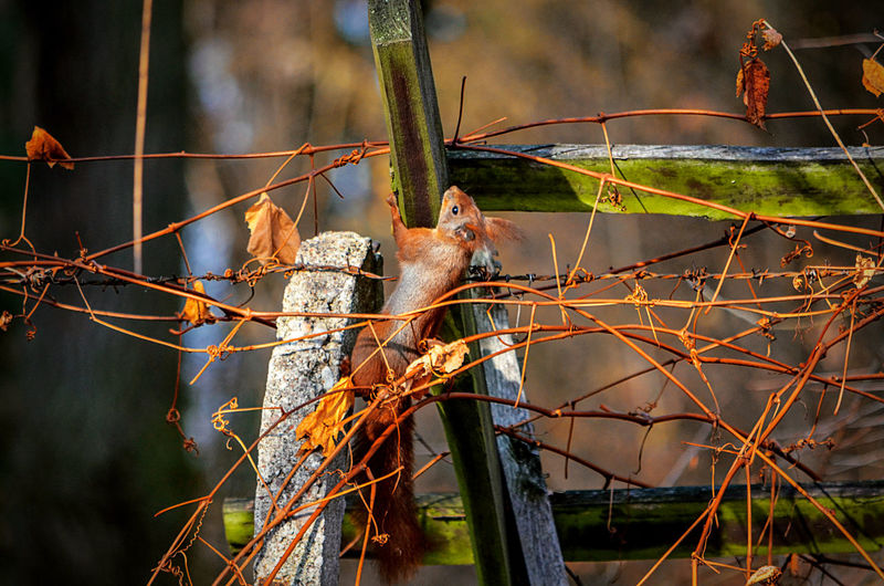 Eichhörnchen Squirrel Squirrel Photo Animal Animal Themes Animal Wildlife Animals In The Wild Bird Branch Close-up Day Focus On Foreground Grapes Nature No People One Animal Outdoors Perching Plant Selective Focus Squirrel Closeup Squirrels Tree Vertebrate Wiewiorka
