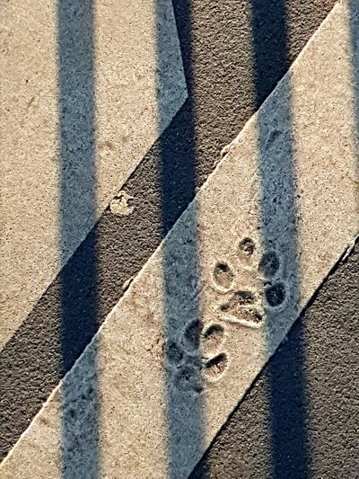 Footprint of dog on white line Footprint Of The Dog White Line Abdruck Hundepfote Diagonal Lines Geometric Lines Gitter Shadow Sunlight Day High Angle View Outdoors Focus On Shadow No People LINE