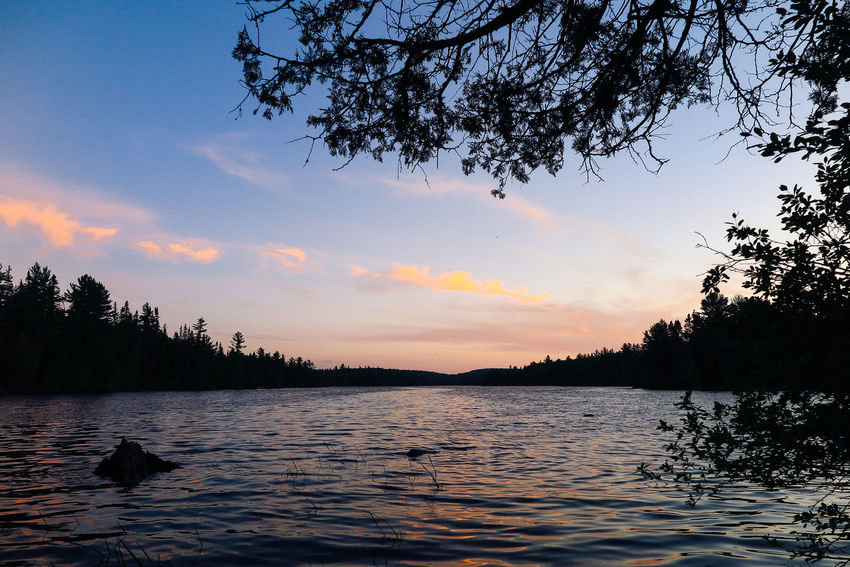 Algonquin Park Algonquinpark Algonquinprovincialpark Animal Themes Animals In The Wild Beauty In Nature Bird Cloud - Sky Day Lake Nature No People Outdoors Reflection Scenics Silhouette Sky Sunset Swan Tranquil Scene Tranquility Tree Water Waterfront