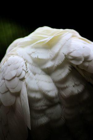 Canon 1200D Sigma 70-300mm 🐦PARC DES OISEAUX 🐦Bird Photography Textured  Wildlifephotographer Park Canon1200d Canonphotography 70-300mm Villard Les Dombes Parc Des Oiseaux Parc Des Oiseaux