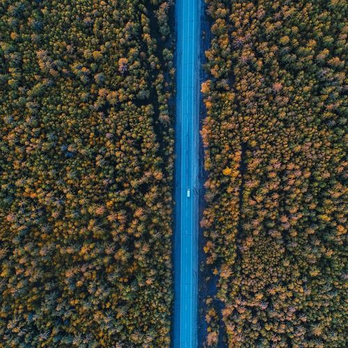 Aerial view of road by trees