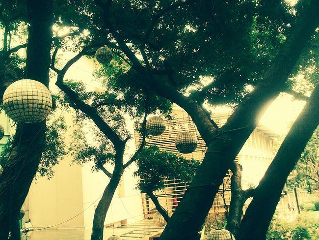 EyeEmNewHere Peaceful Nature Designs Trees Effects Greenbelt Makati 100 Days Of Summer Eyeem Market
