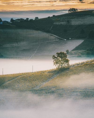 Plant Beauty In Nature Scenics - Nature Tranquility Sky Tree Tranquil Scene Sunset Nature Landscape No People Environment Water Field Land Grass Cloud - Sky Outdoors Non-urban Scene Langhe Landscape_Collection Italy Light And Shadow Fog Morning