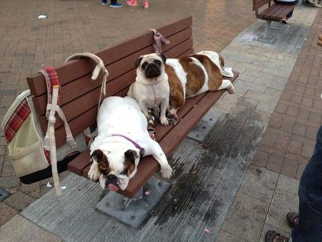Great Outdoors Hi! Cheese! Hong Kong Check This Out Cutedog Cutepups Lazy Pups