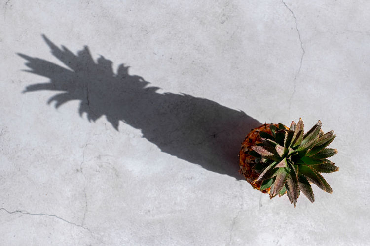 High angle view of plant against wall