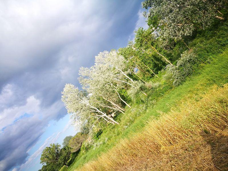 l'uomo e la natura Shadow Beautiful Colors Colorized Contemplazione Solitudini Trees And Nature Cielo Drammatico Tree Mountain Pine Tree Forest Sky Close-up Landscape Cloud - Sky Plant Green Color