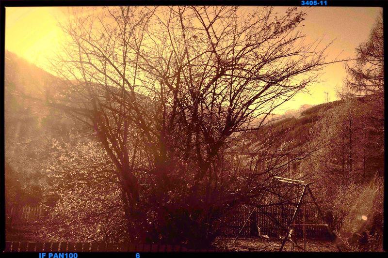 Tree Transfer