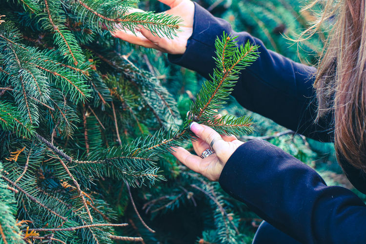 Midsection of woman holding branch of pine tree