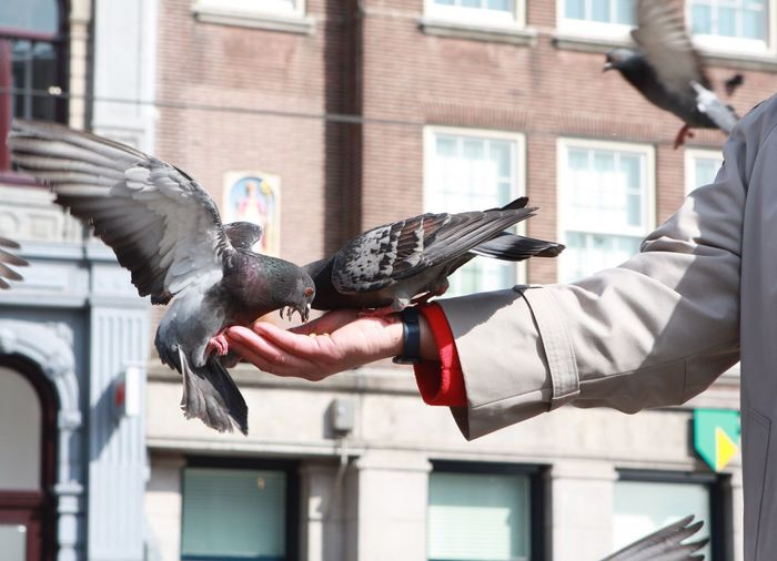 Close-up of hand feeding birds