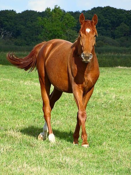 Proud Horse Auburn Beautiful Creature Pose Dressagehorse EyeEm Gallery