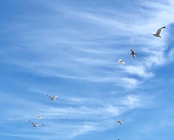 No bombs, please!🦋 --------- Flying Mid-air Bird Sky -------- EyeEm Tadaa Streamzoo Eye4photography  Tadaa Community Streamzoofamily