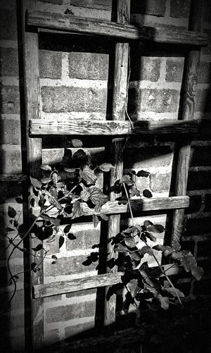 Trellis Brick Wall Clematis Sunlight Shadow Wood Climbing Plant Dramatic Black And White Jixipix