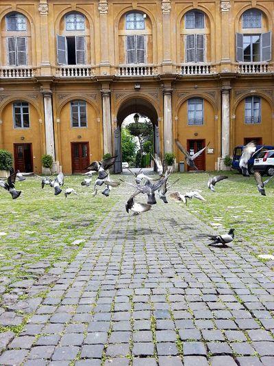 Birds Bird Photography