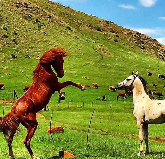 For The Love Of Horses Horses Love For Animals Hello World I Love Horses One Day Awesome