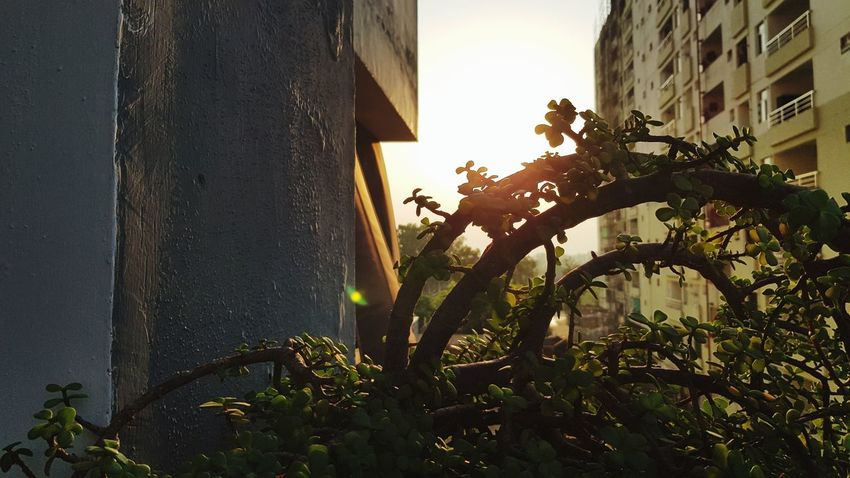 Tree City Sunlight Bicycle Sky Architecture Building Exterior Built Structure EyeEmNewHere